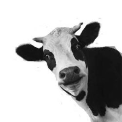 Laughing Cow Productions